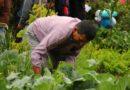 Inscripciones abiertas para la sexta edición de Escuela de Chacras en los Chillos