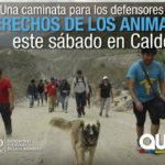Viaje a pie a Calderón para reflexionar sobre fauna urbana y convivencia responsable