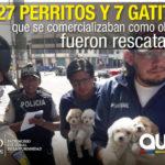 La Agencia Metropolitana de Control rescató 34 animales de compañía