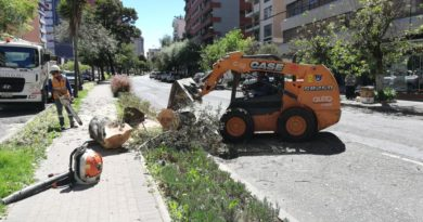 Árboles de la González Suárez retirados porque cumplieron su vida útil
