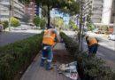 94 árboles se siembran en la González Suárez