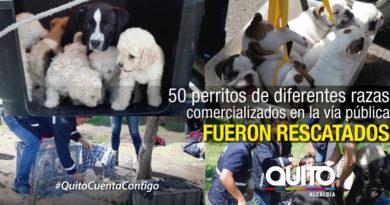 Municipio de Quito realizó  operativo de control de la fauna urbana en el sur de la ciudad