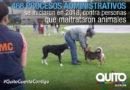 La AMC realiza inspecciones para evitar el maltrato y mala tenencia animal