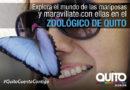 'Volare': Las mariposas llegan al zoológico de Quito