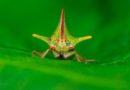 Último fin de semana de biodiversidad en el Yaku