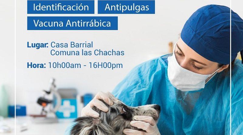 Municipio de Quito realizará censo de Bienestar Animal