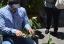 Manejo de frutales, podas e injertos para los ciudadanos de Quito