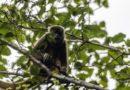 Zoológico de Guayllabamba recibe apoyo del Municipio capitalino