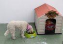 Registro de la Propiedad se alinea y apoya 100% la política animalista del Municipio de Quito