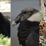 Zoológico de Guayllabamba celebrará el Día Mundial de los Animales