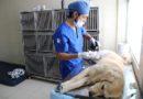 Manejo integral de fauna urbana incide en los sectores urbanos y rurales de Quito