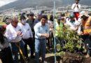 136 510 árboles se han plantado en Quito