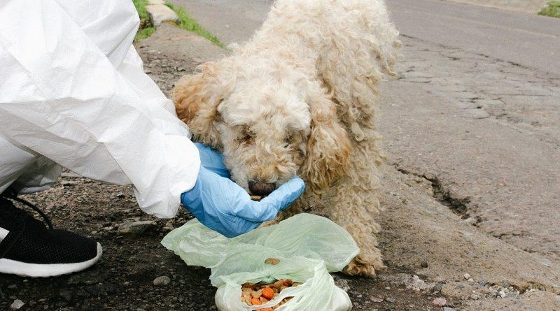 Acciones a favor de la fauna urbana