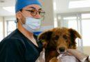 Centros Municipales de Atención Animal laboran ininterrumpidamente en estado de emergencia