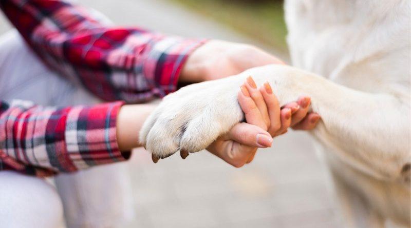 Recomendaciones para el cuidado de animales de compañía