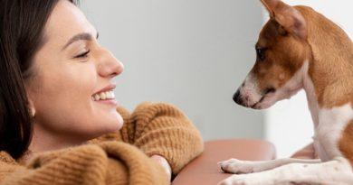 Sanciones por abandono de animales de compañía