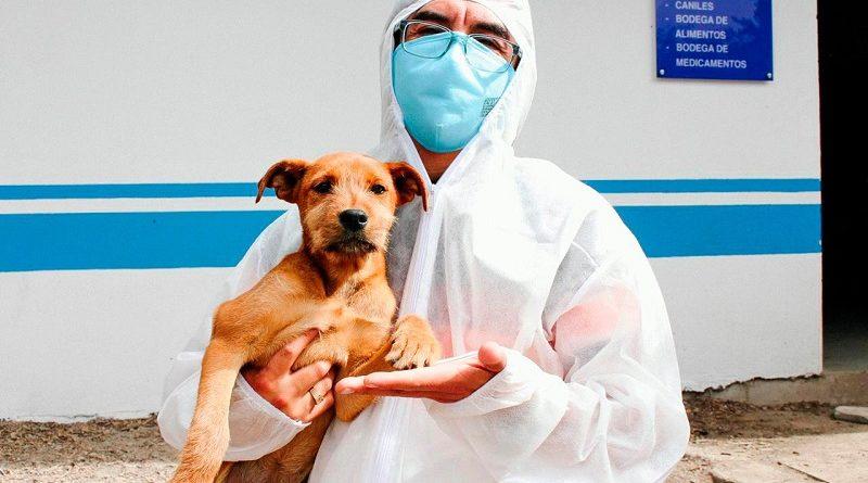 Cuidados para animales de compañía