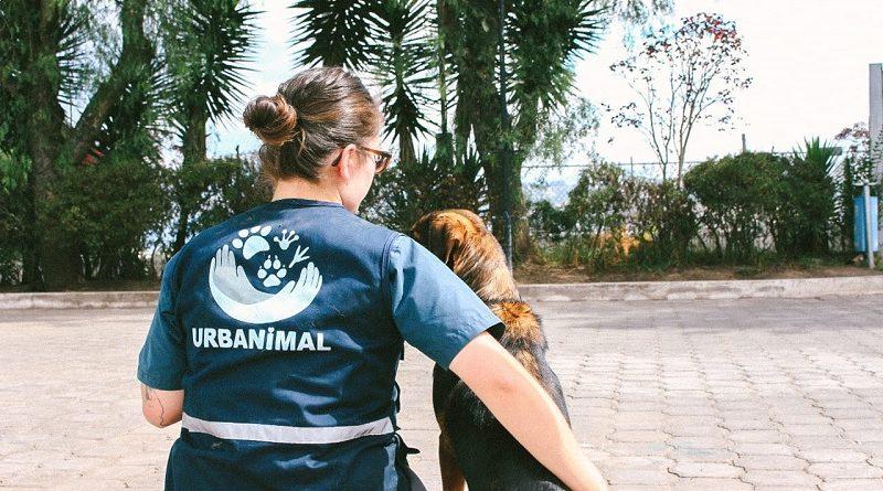 Sanciones maltrato animal