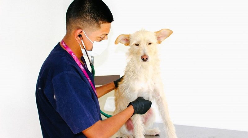 Urbanimal garantiza bienestar animal