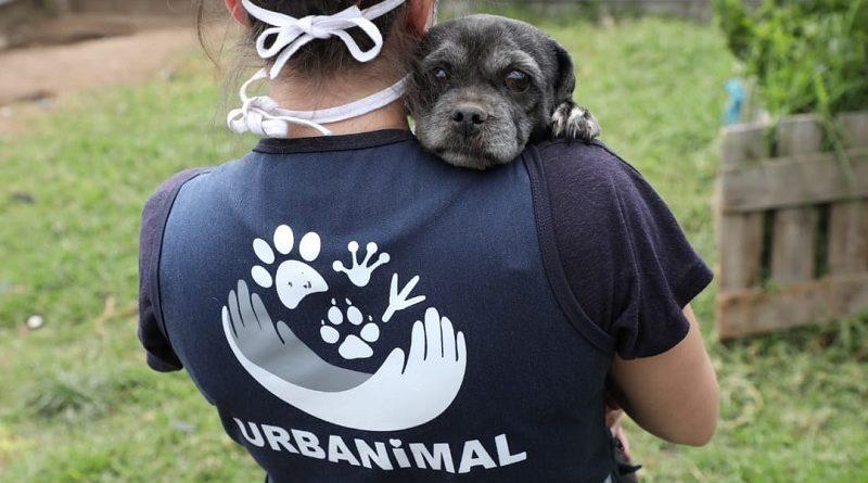 Adopción de animales de compañía