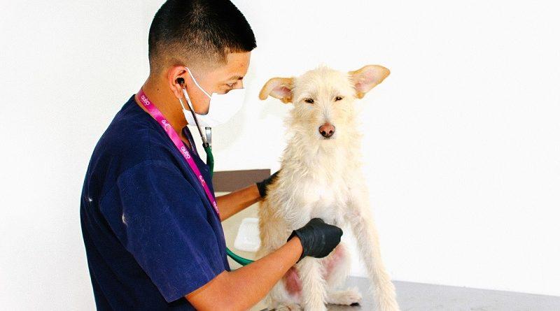 Carné de salud animales domésticos