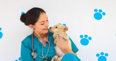 Recomendaciones en verano para cuidado de animales de compañía