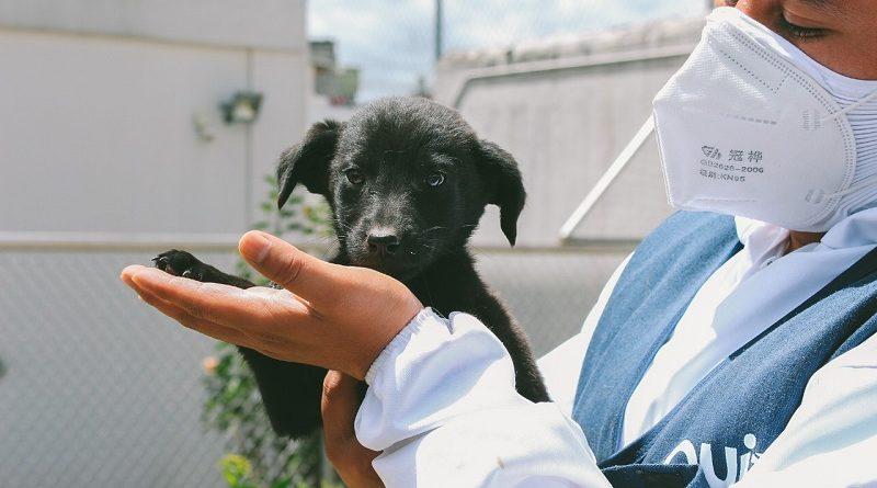 Recomendaciones para recibir animales de compañía
