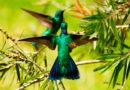 Quito se suma a Festival Mundial de las Aves