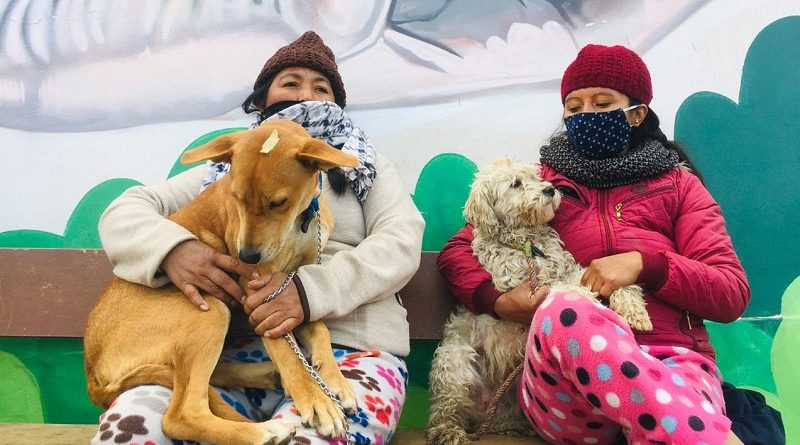 Campaña esterilización sur de Quito
