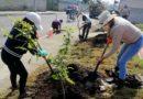 Trabajo para mejorar el medio ambiente en la Zonal Calderón