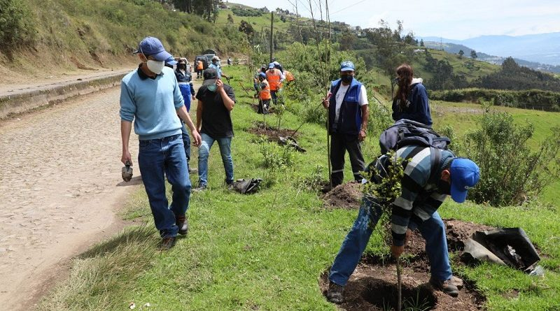 Arborización Parque Metropolitano del Sur