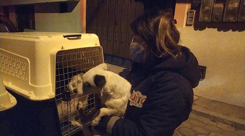 Canes rescatados