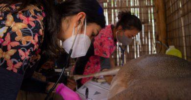 Prevención: animales del Zoológico son evaluados