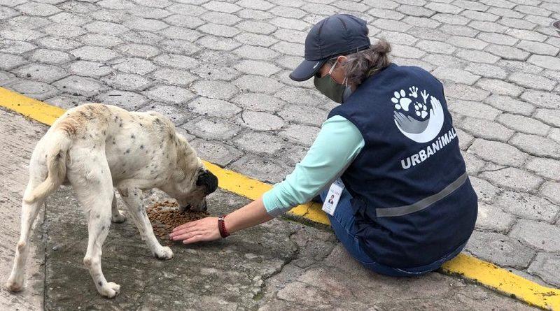 Alimentación animales vulnerables