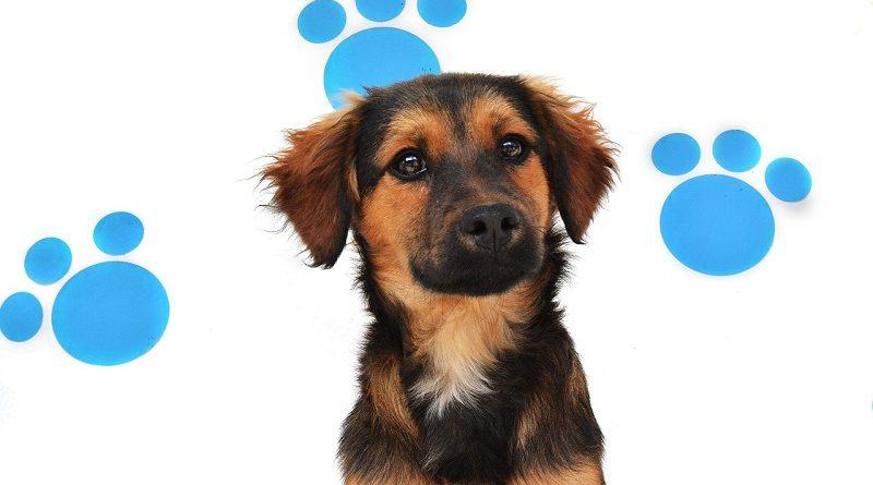 Adopciones animales de compañía